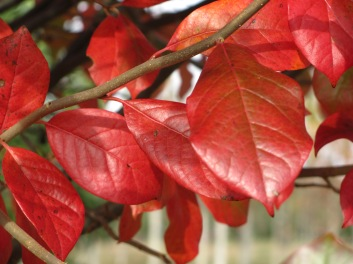 Green Gable™ Fall Foliage
